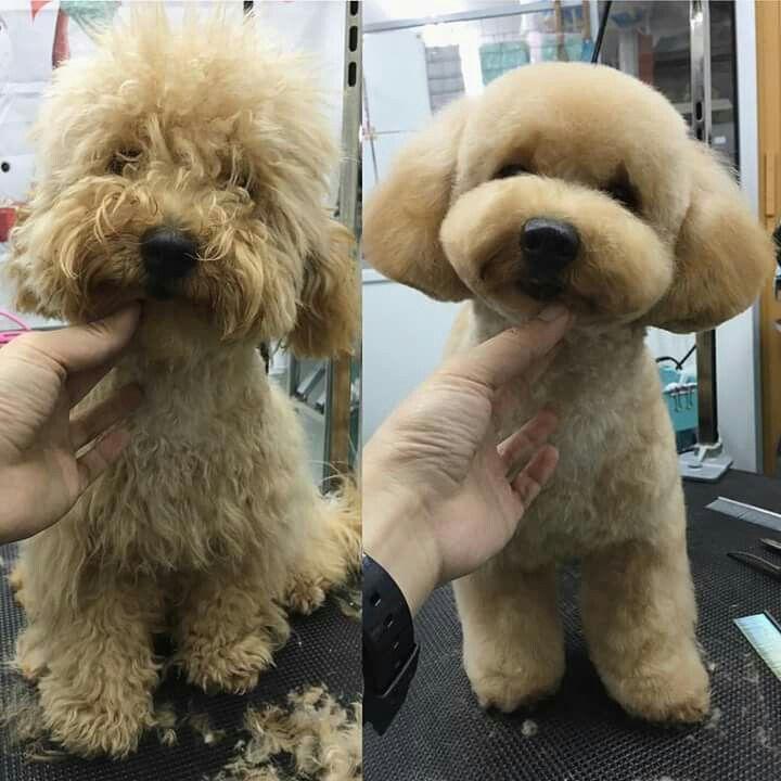 1173e1fa080e196363ae5ebee6fed37a--before-after-grooming-dogs